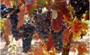 """El TC declara inconstitucional la ley del """"fracking"""" de La Rioja"""